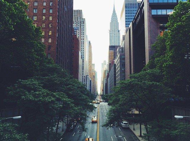 Road inbetween trees in NYC